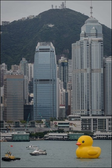 Giant Duck in Hong Kong