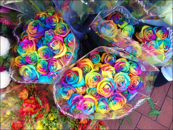 Rainbow roses all colors in one rose general discussion for How to color roses rainbow
