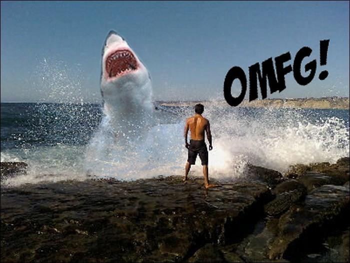 Shark humor
