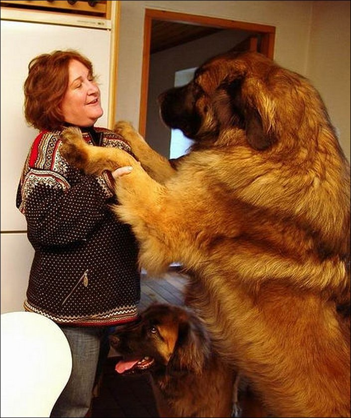 The Biggest Dogs