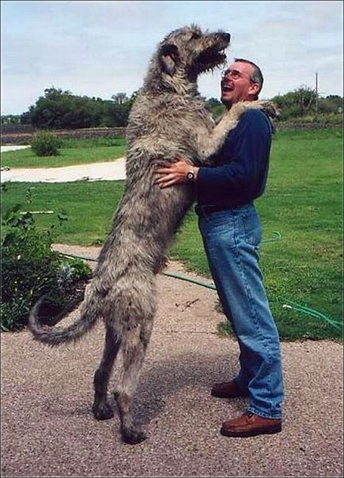 Dogzilas: The Biggest Dogs on Earth