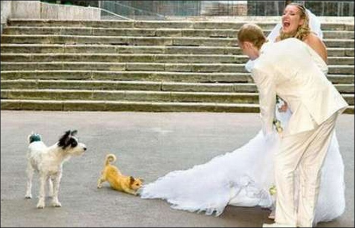 Stupid wedding photos