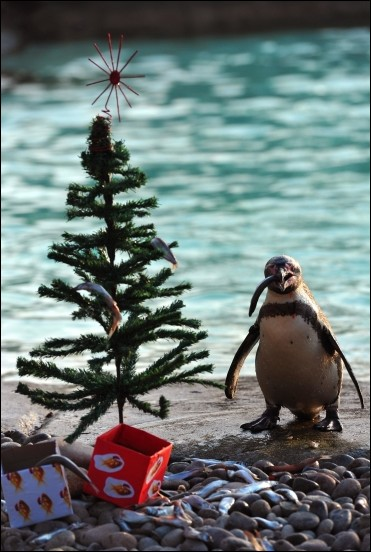 Christmas in Zoo