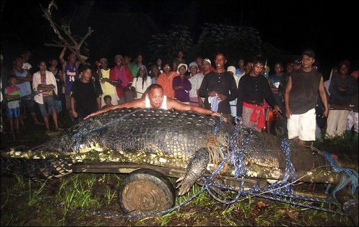 World's Biggest Crocodile Ever Caught