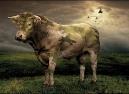 Creative Animals Digital Art Images