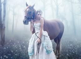 Beauty and the horse