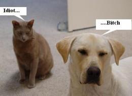 Dogs VS. Cats: An endless war