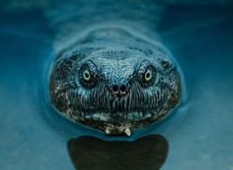The most amazing animal close-ups