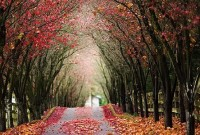 Fantastic Beauty of Tree Tunnels