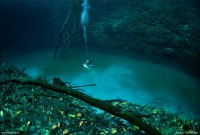 Cenote Angelita: An Underwater River Photographed by Anatoly Beloshchin