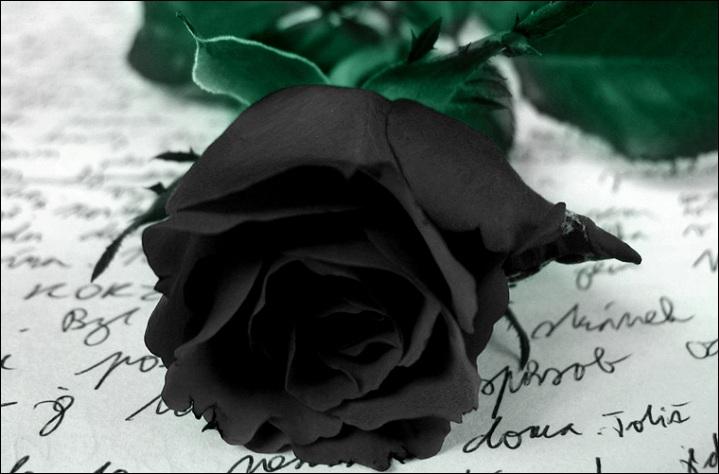 Black Rose Beauty That Doesnot Existfun Guerilla