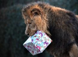 Christmas in Zoo
