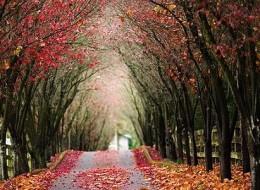 Fantastic Beauty of Tree Tunnels