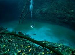 Cenote Angelita: An Underwater River Photographed by Anatoly Beloshchin
